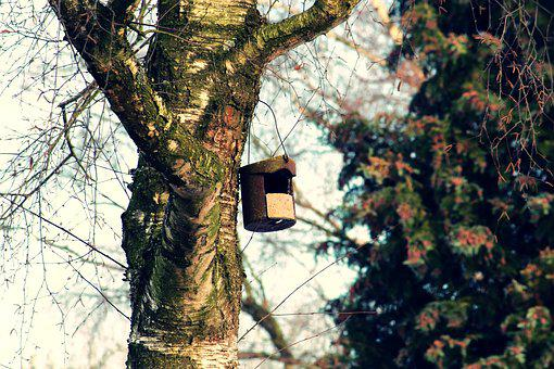 Bird Feeder, Tree, Aviary, Nesting Box, Nesting Place