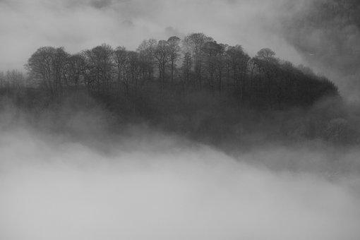 Inversion, Trees, Mist, Landscape, Forest, Hill, Nature