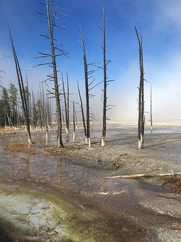 Yellowstone, Trees, National, Park, Wyoming, Nature