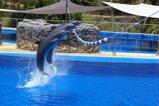 Dolphin, Water, Zoo
