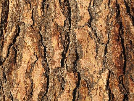 Bark, Tree, Wood, Pattern