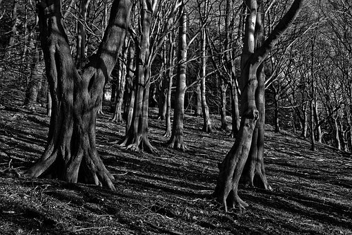 Trees, Woods, Mystery, Forest, Dark, Fantasy