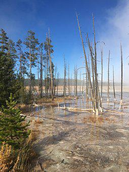 Yellowstone, National, Park, Wyoming, Nature, Usa
