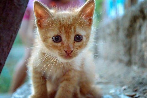 Cat, Kitty, Animal, Feline, Pet, Cute, Fur, Kitten