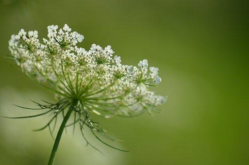 Flower, Fleurs Des Champs, Pre, Field, Nature, Summer