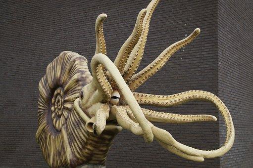 Fossil, Nautilus, Ammonit, Replica, Snail Shell