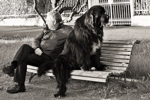 Qualities Dog Man's Best Friend, All The Time, Union