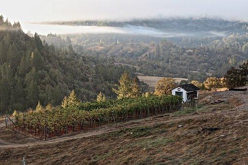 Winery, Wine, Sonoma, California, Wineglass, Vine