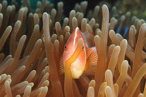 Fish, Ocean, Sea, Corals, Coral, Light, Colors, Diving