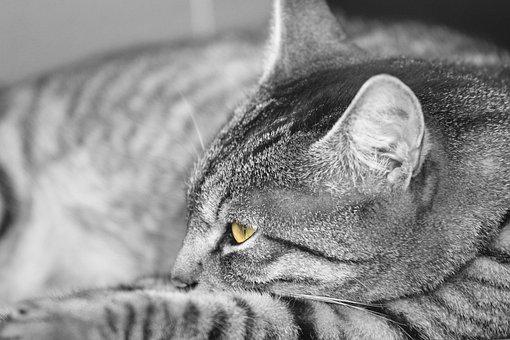 Cat, Animal, Pet, Cute Cat, Mieze, Sweet, Domestic Cat