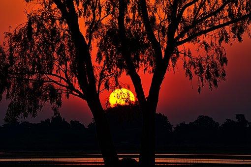 Sunset, Landscape, Tree