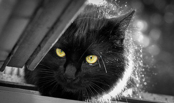 Cat, Hair, Animal, Cat Eyes, Feline, Eyes, Predator
