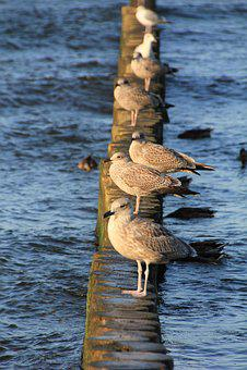 Gulls, Holiday, Beach, Sea, Summer, Baltic Sea, Birds
