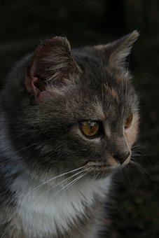 Cat, Love, Animal, Beautiful, Cute, Kitty, Small
