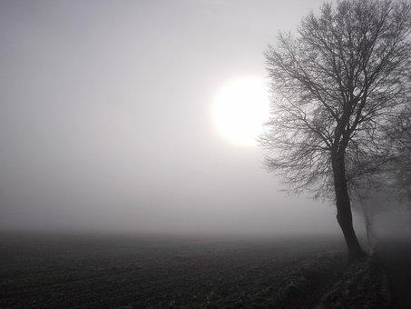 Sun, Fog, Field, Tree