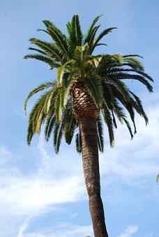 Palm, Sun, Summer, Tree, Sky, Nature