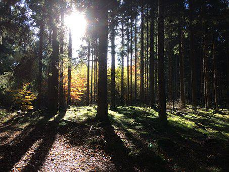 Sun, Sunbeam, Autumn Mood, Forest