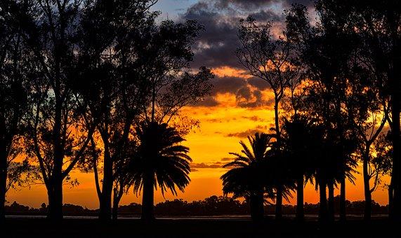 Sunset, Laguna, Landscape, Palms