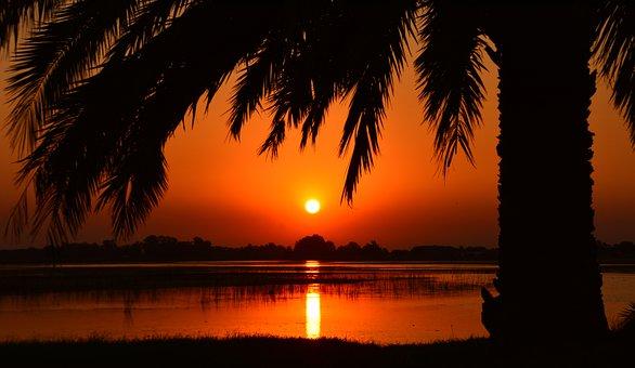 Sunset, Palm Tree, Laguna, Landscape