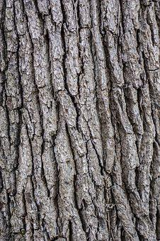 Tree, Bark, Wooden, Pattern, Texture