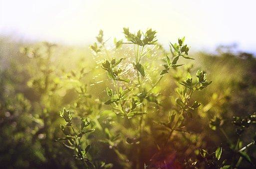 Grass, Field, Spider Web, Summer, Nature, Meadow
