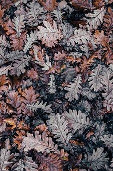 Leaf, Leaves, Autumn, Fall, Brown, Autumn Leaves