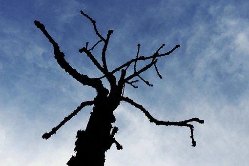 Tree, Silhouette, Menace, Threat, Menacing, Threatening
