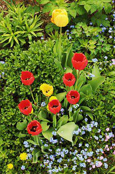 Tulips, Garden, Spring, Flowers, Red Tulips, Bouquet