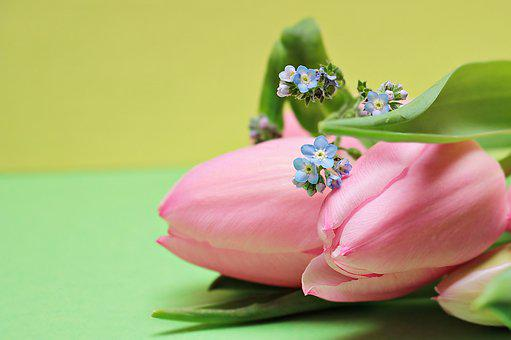 Tulips, Forget Me Not, Flowers, Heart, Bloom, Spring