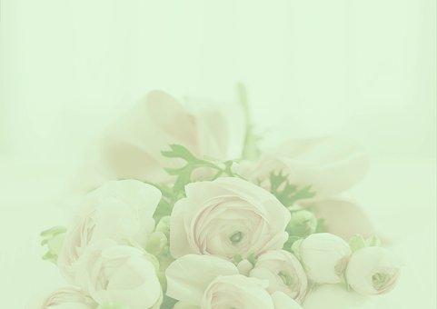 Pastel, Roses, Background, Romantic, Wedding