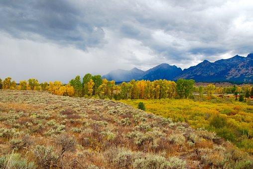 Aspen, Storm, Mountains, Yellowstone, National, Park