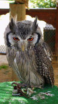 Owl, Birds, Zoo, Benidorm, Bird Of Prey, Nature