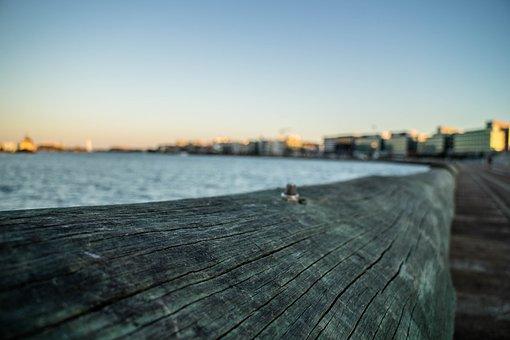 Bark, Blur, Buildings, City, Clear Sky, Close-up, Dawn
