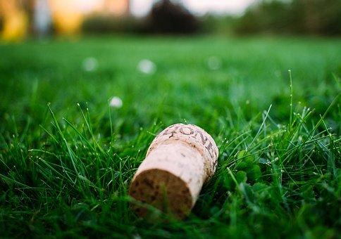 Blur, Close-up, Cork, Environment, Fall, Field, Focus