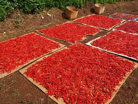 Chili, Pepper, Red, Chilli, Color, Food, Vegetable
