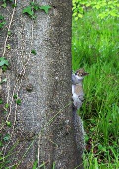 Squirrel, Woods, Tree, Nature, Animal, Forest, Wildlife