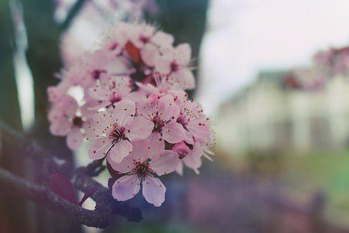 Spring, Bloom, Nature, Blooming, Blossom, Plant