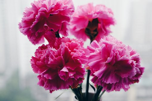 Flower, Still Life, Ppt Backgrounds, Plant, Color