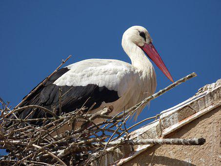 Stork, Nest, Roof, Animal, Bird