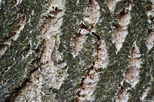 Tree, The Bark, Forest, Trunk, Nature, Plant, Texture