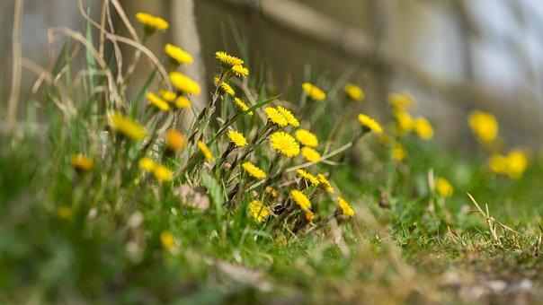 Nature, Background, Pattern, Plant, Grasses, Landscape