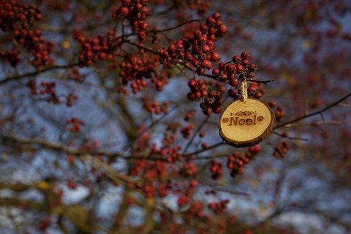 Branch, Bright, Color, Fall, Flora, Fruit, Leaf