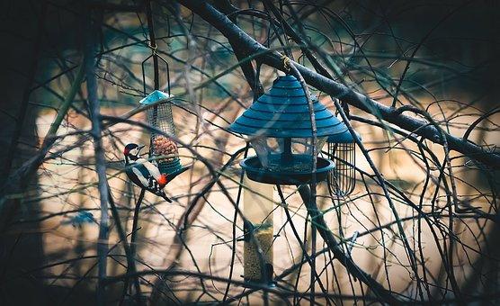 Animal, Autumn, Avian, Bird, Birdhouse, Branches, Cage