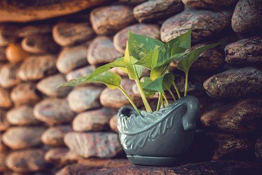 American Green Tree Frog, Coffee, Cup, Sunset, Tree