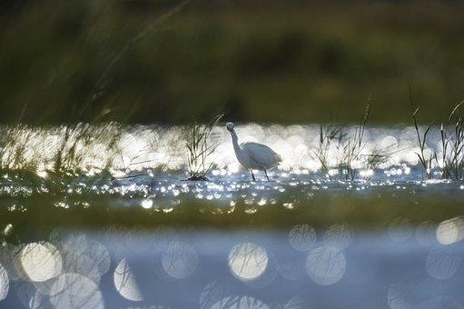 Animal, Beautiful, Bird, Cold, Color, Dawn, Grass, Lake