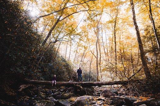 Branch, Dawn, Daylight, Environment, Fall, Gold