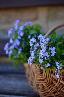 Forget Me Not, Flowers, Flower Basket, Spring, Myosotis