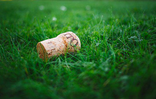 Blur, Close-up, Cork, Field, Focus, Grass, Grass Field