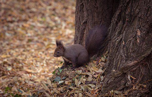 Animal, Leaves, Nature, Portrait, Squirrel, Tree