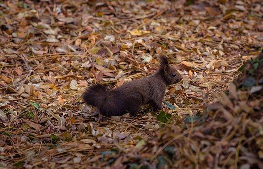 Animal, Leaves, Nature, Portrait, Squirrel
